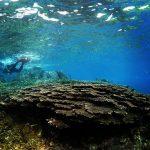 屋久島の海・川で「サンゴ頑張る」