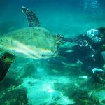 屋久島の海・川で カメの襲撃