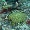 屋久島の海・川で ウミガメ死す