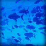 屋久島の海・川で。群れ~~~~~~っ!