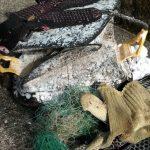 屋久島の海・川で。ゴミ漁推進委員会、地道に活動中でっす。